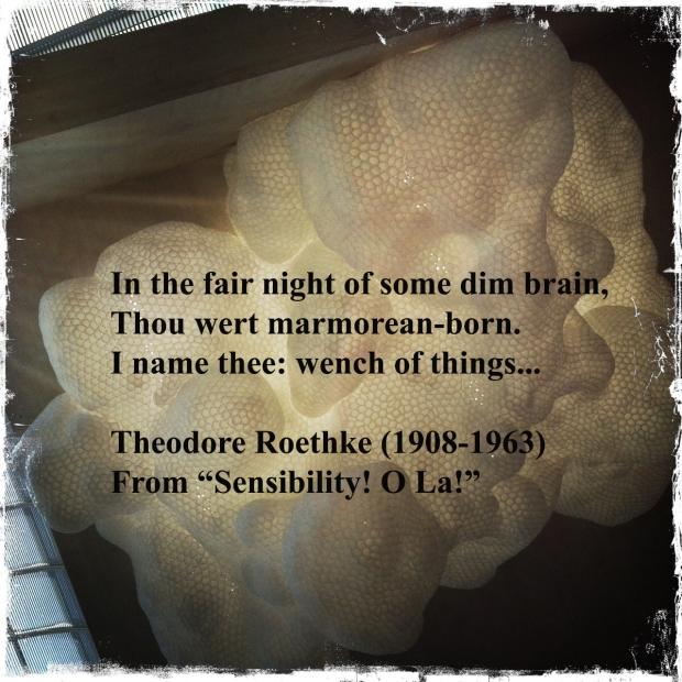 Excerpt Tuesday - Sensibility! O La! - Theodore Roethke