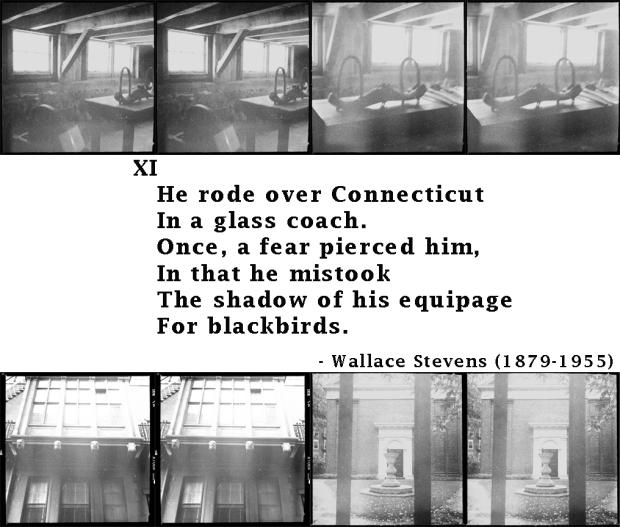 xiofblackbirds