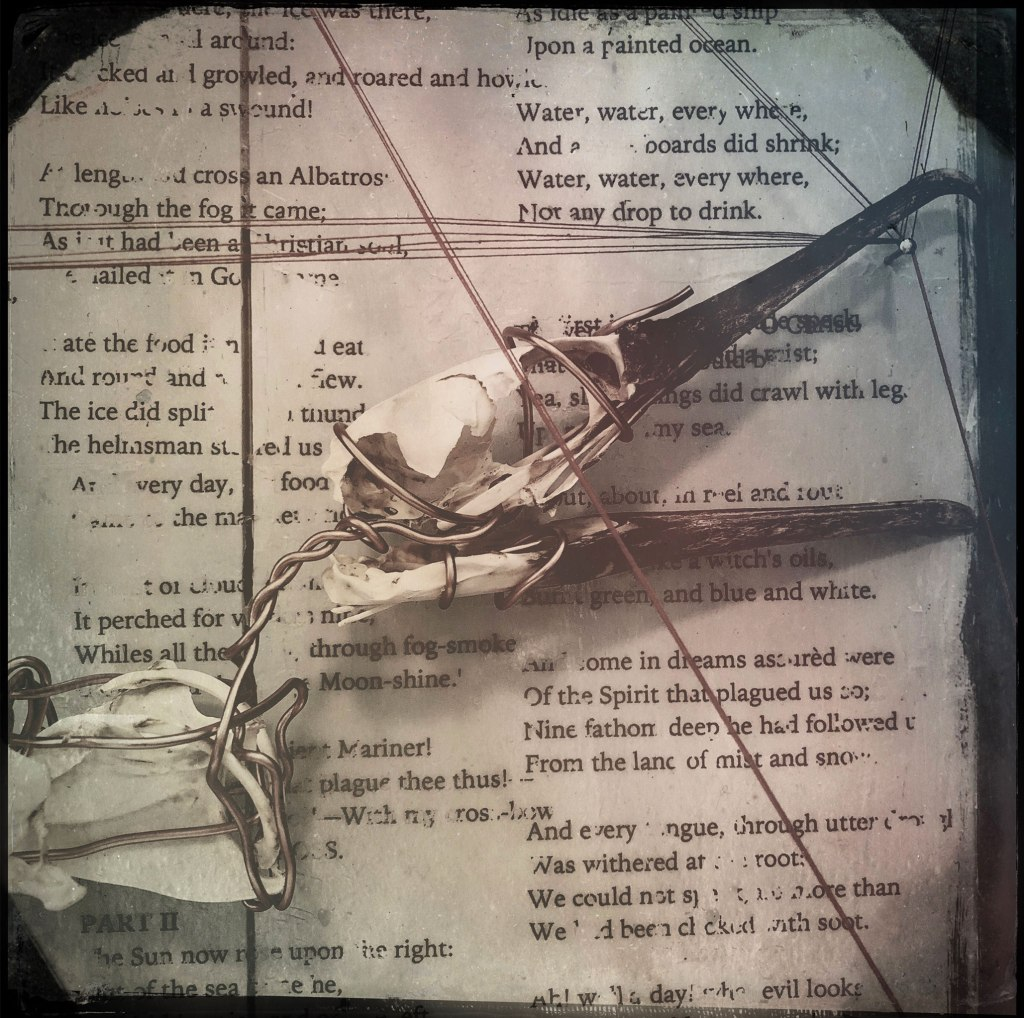 black and white photo of details from the Albatross box - bird skull entwined in thread and wire