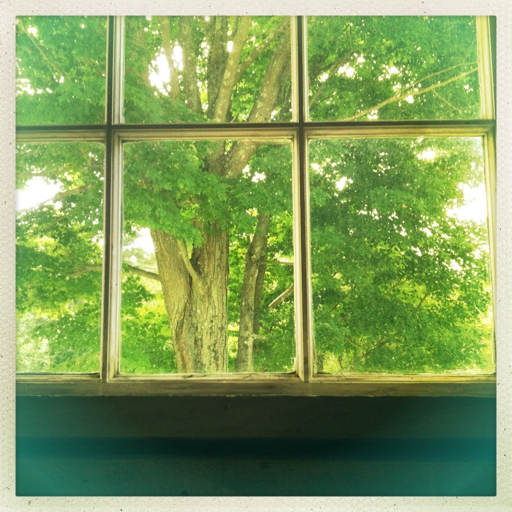 View of the trees from inside the Frost home